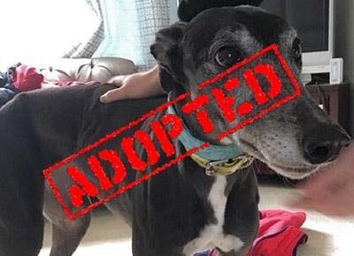 Connecticut Greyhound Adoption - GPA
