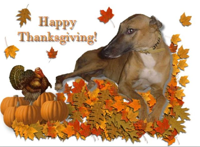 Thanksgiving Greyhound