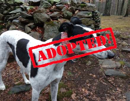 adopted free