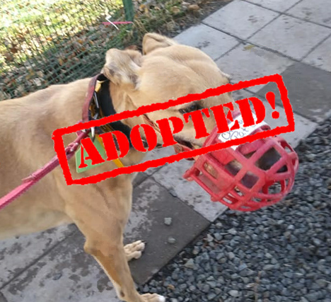 adopted red