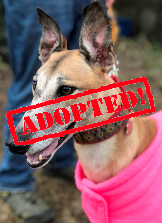 adopted veni