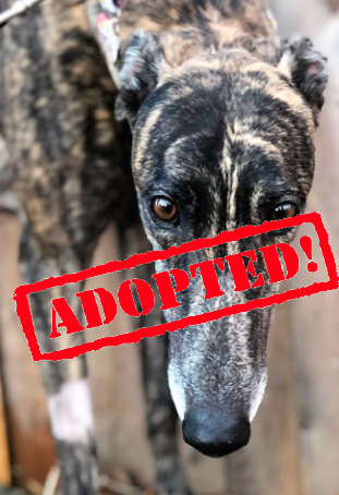blue adopted