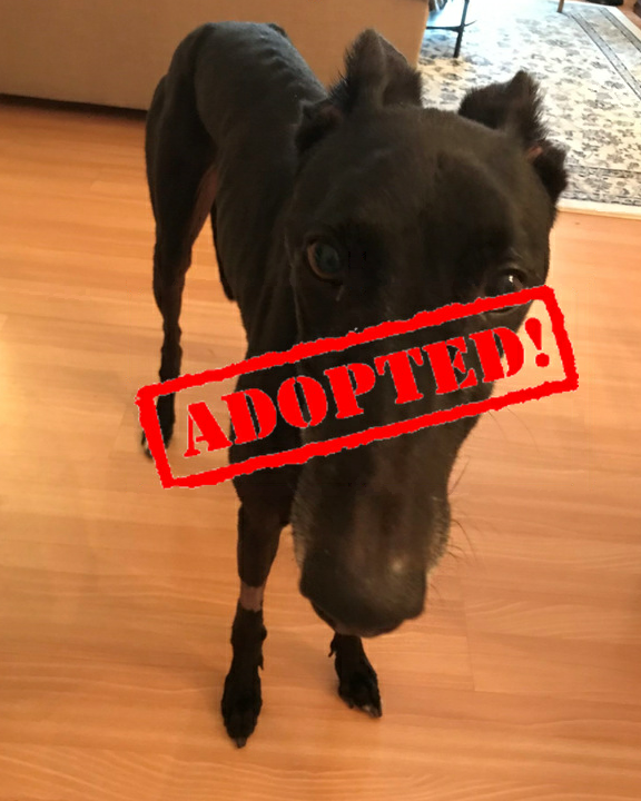 adopted tommy
