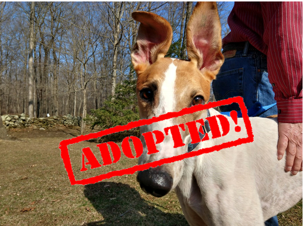 adopted waylon