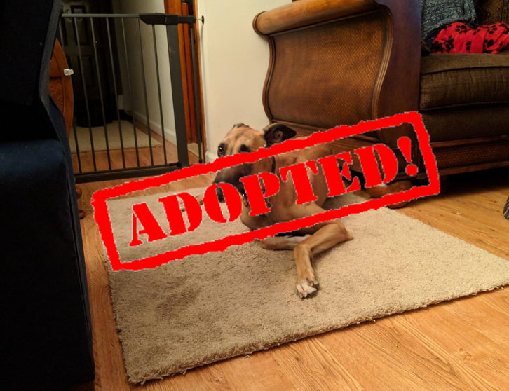 Adopted_Benny