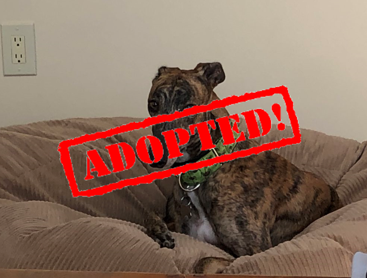 Adopted_Lola