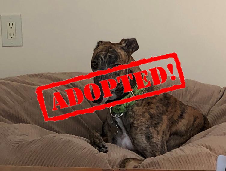 Adopted_Lola