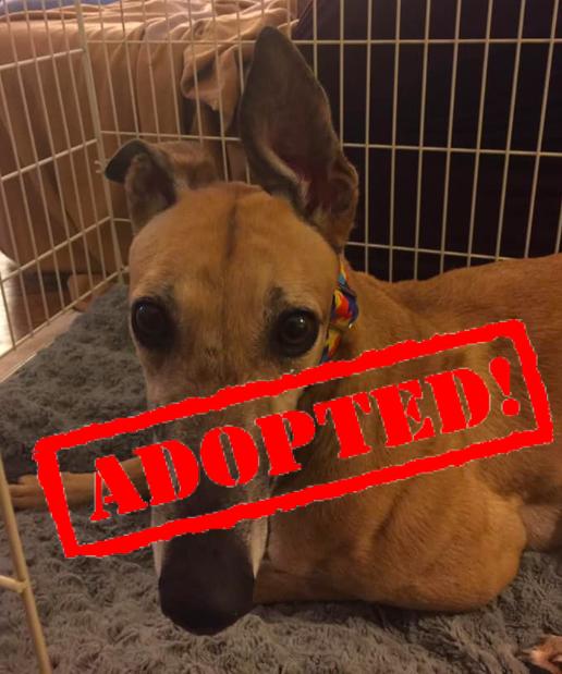 adopted bae