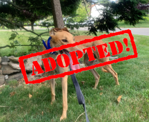 adopted tryst
