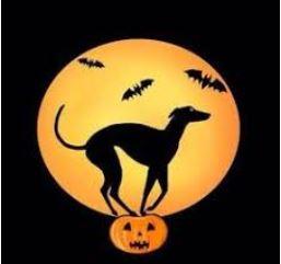 Greyhound and pumpkin