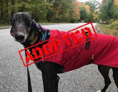 Orlando Adopted