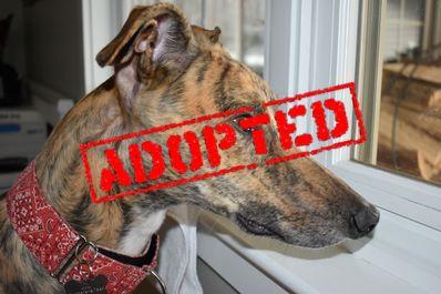 Eddie Adopted