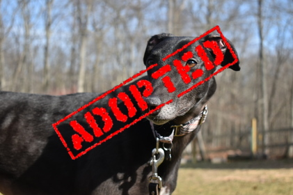 CET Bo Bo Adopted