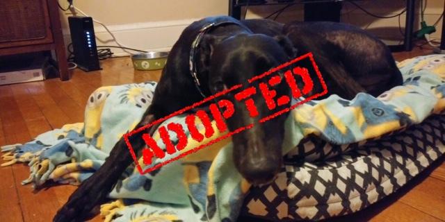 Cobi_Adopted