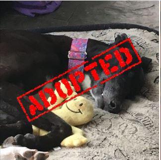 Antonia_AJW San Antonio2_Adopted