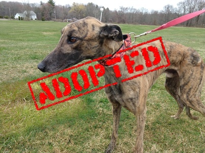 Donnie_Beat Goes On_Adopted