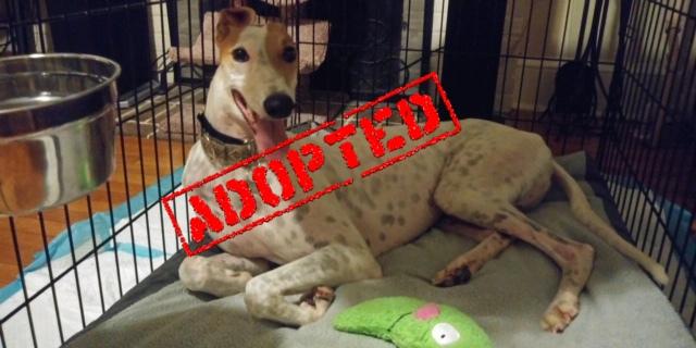 Ledge_AJN On A Ledge_Adopted