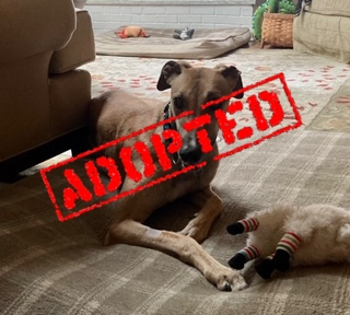 Becky_JS Hotbox_Adopted