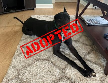 Sally_Sally Kellerman_Adopted