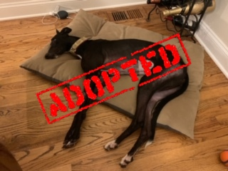 Aspen_Adopted