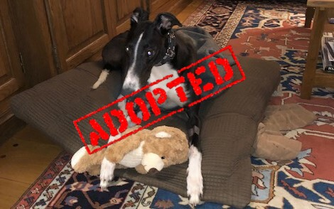 Timmy_K's Timmy_Adopted
