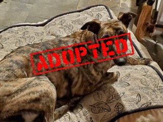 Guy_100920_Adopted