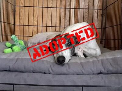 Godiva_Go Godiva_Adopted