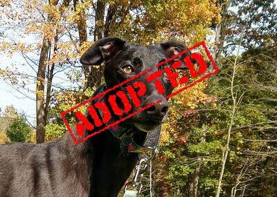 Undertaker_CET Undertaker_Adopted