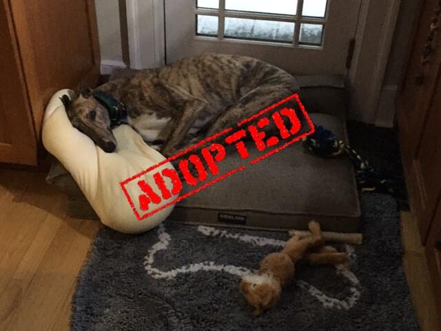 Saca_GLS Free Roll_Adopted