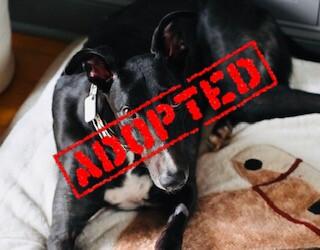 Kane_Oh Ya Coors_Adopted