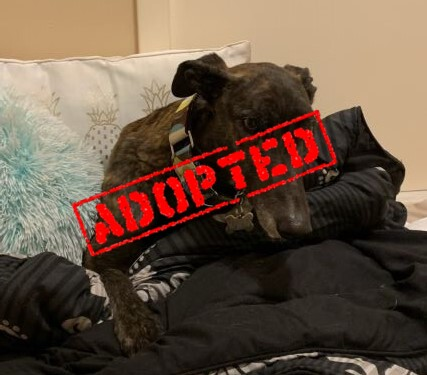 Lucky_Lucky Roll_Adopted